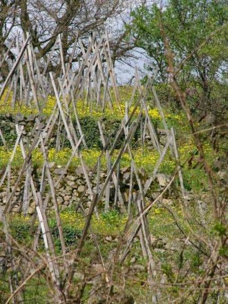 terrasses avec echalas, murets et fleurs - vignobles des Condrieu