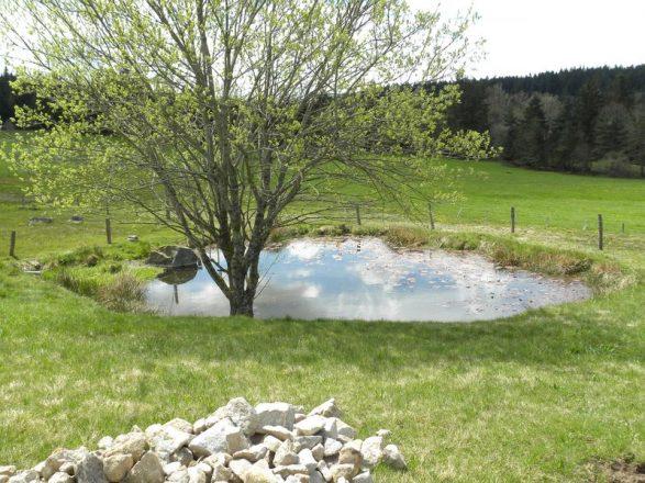 Point d'eau mare entre  lieux-dit Montaron et Bourgaud