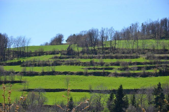 Terrasses agricoles - Deome - Bourg-Argental - La Faurie