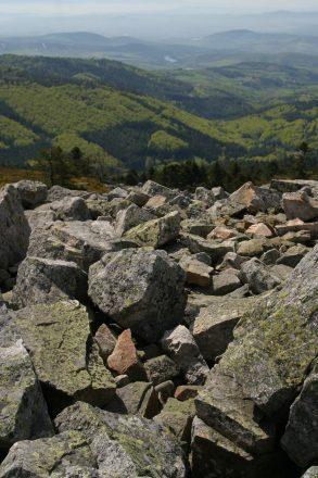 Vue sur la hetraie de Saint-Sabin depuis les crets
