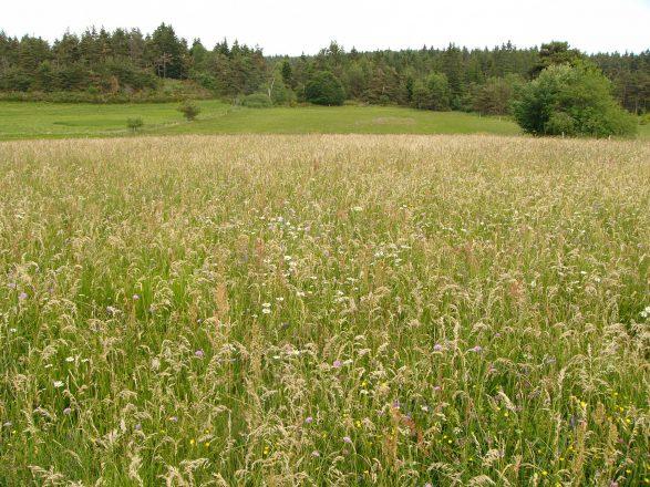 Prairie aux Chaumasses