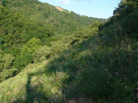 Pelouse a Montelier