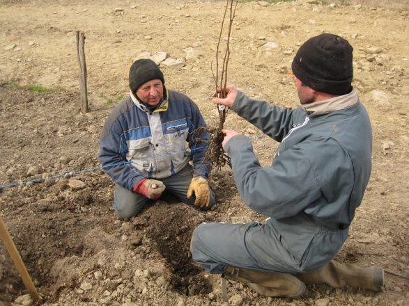Chantier de plantation de haies