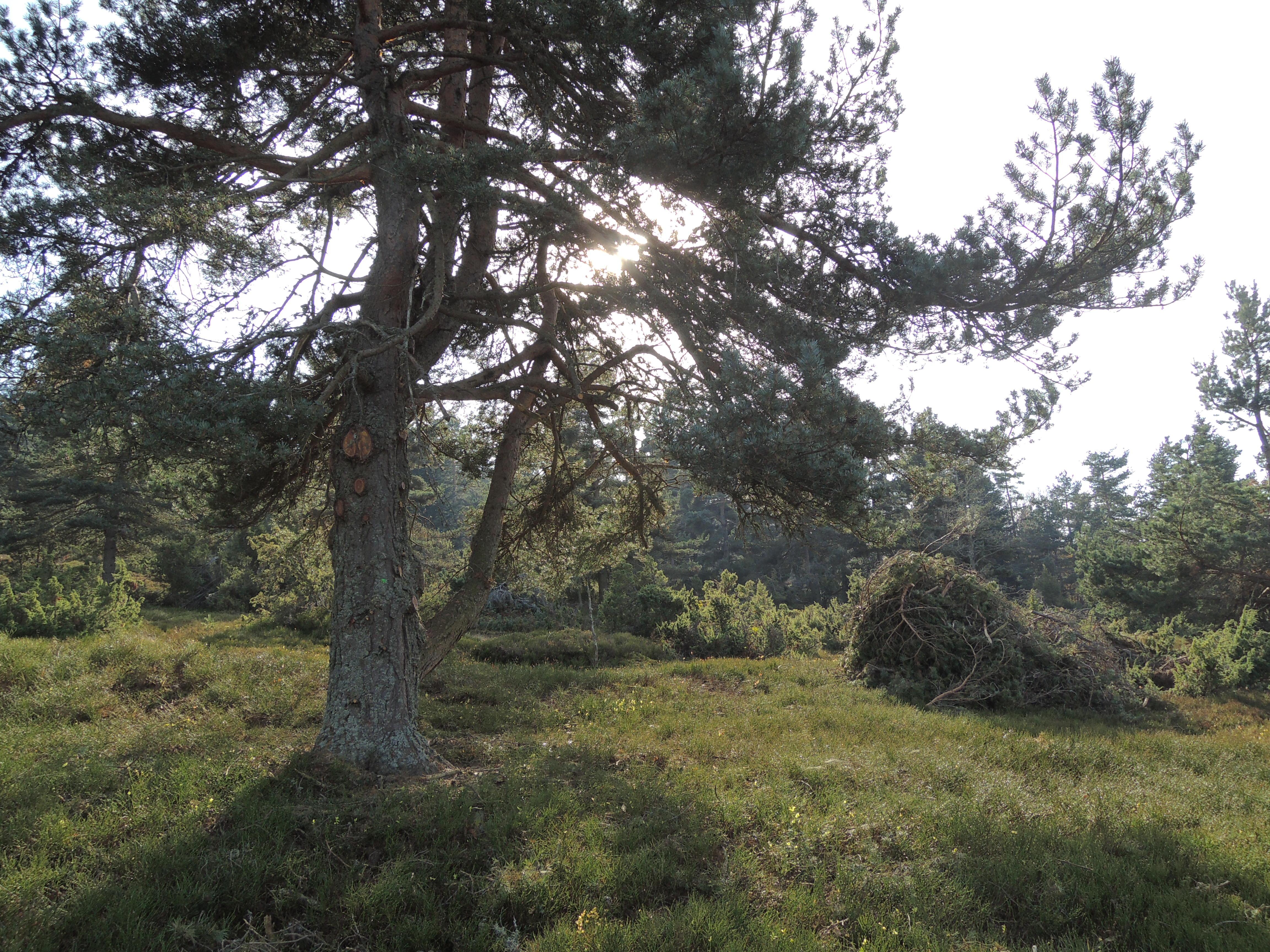 Branches mises en tas par le comite des chemins cointarant a Chaussitre (chantier benevole).